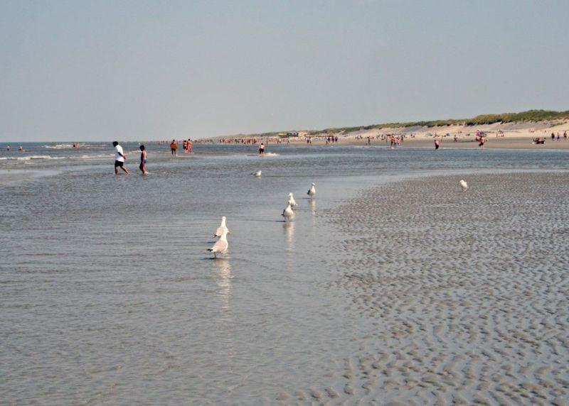 Strand1154-Middel